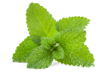Herb of the Month Lemon Balm